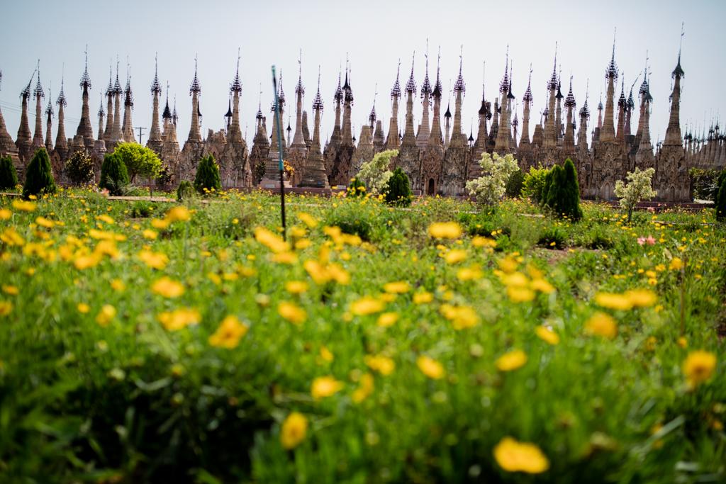 Yellow flowers in Kakku