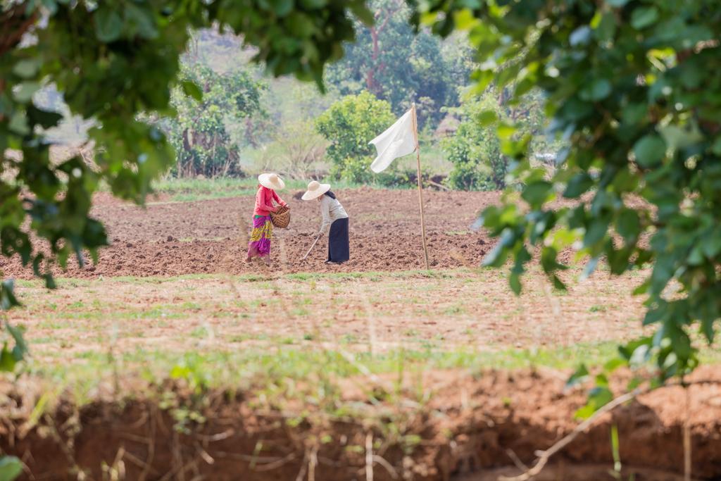 Farmers in Kakku