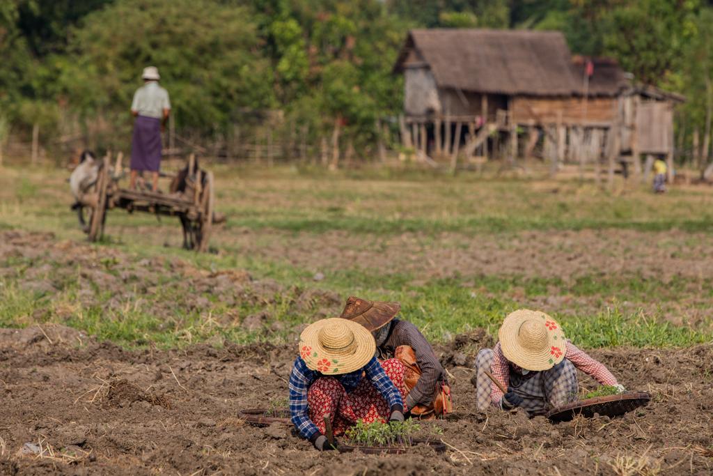 Farming in Sankar