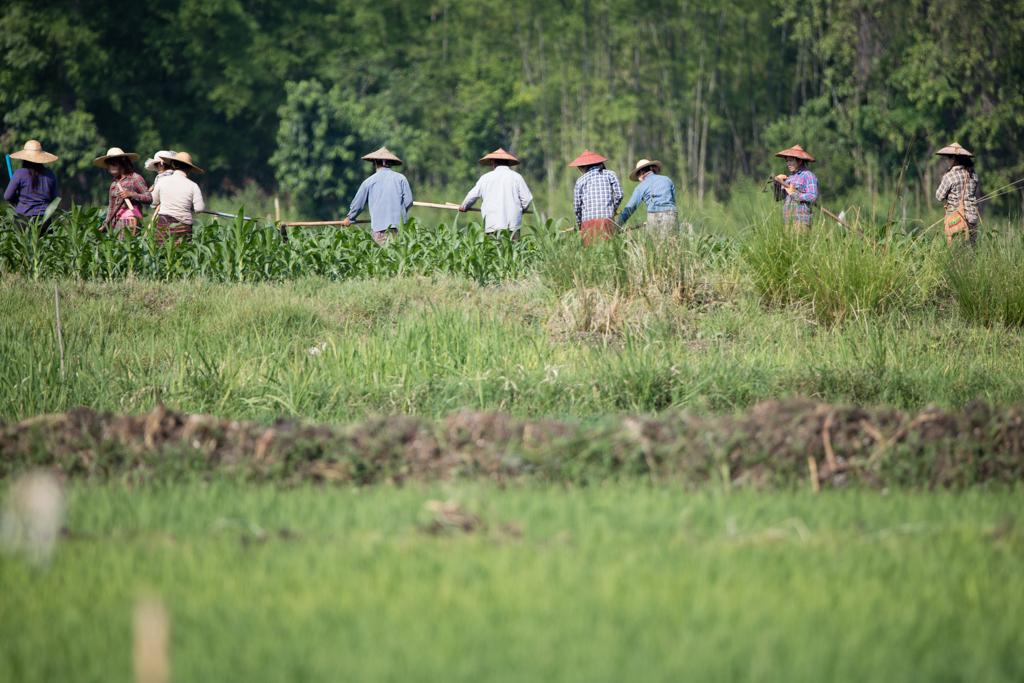 Farmers at work in Myanmar