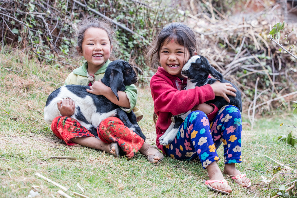 Little girls with young goats