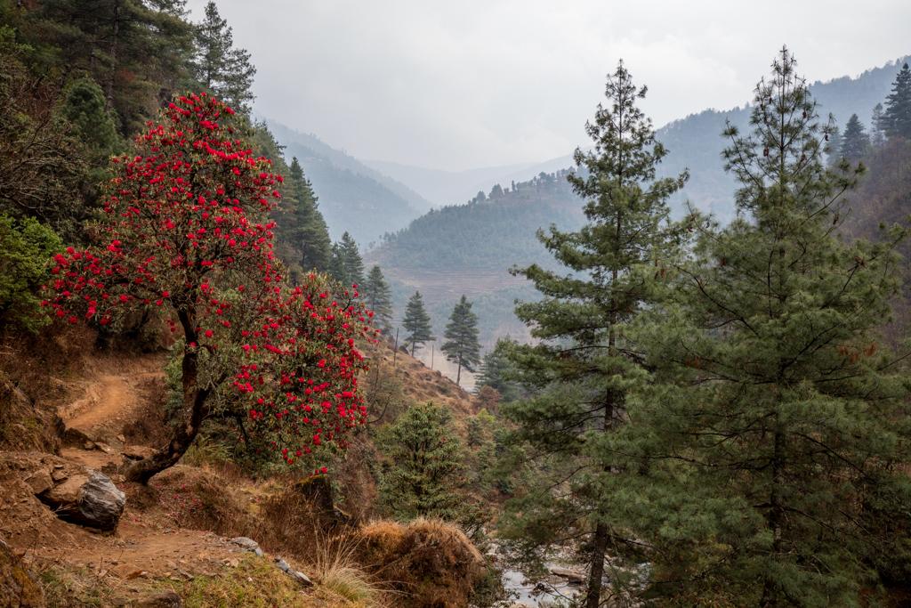 Colorful trees close to Jiri