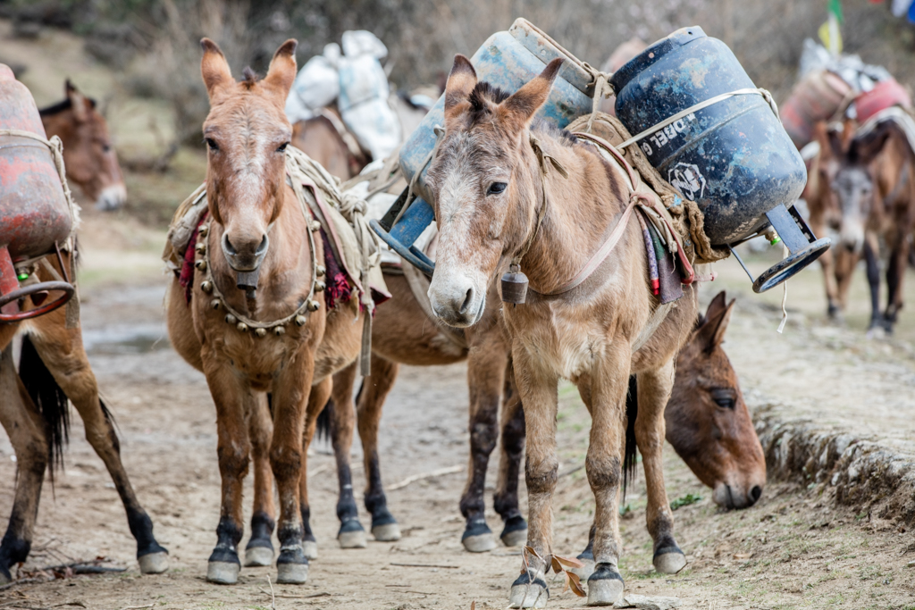 Strong mules with fuel bottles
