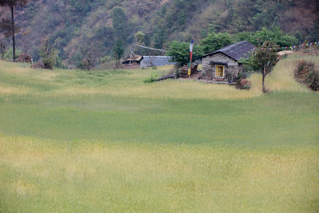 Green, yellow fields