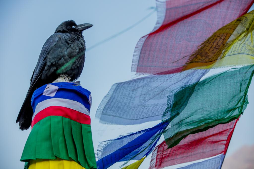 Bird within prayer flags