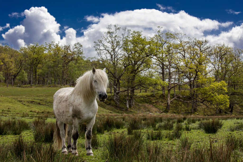 White horse in Scotland