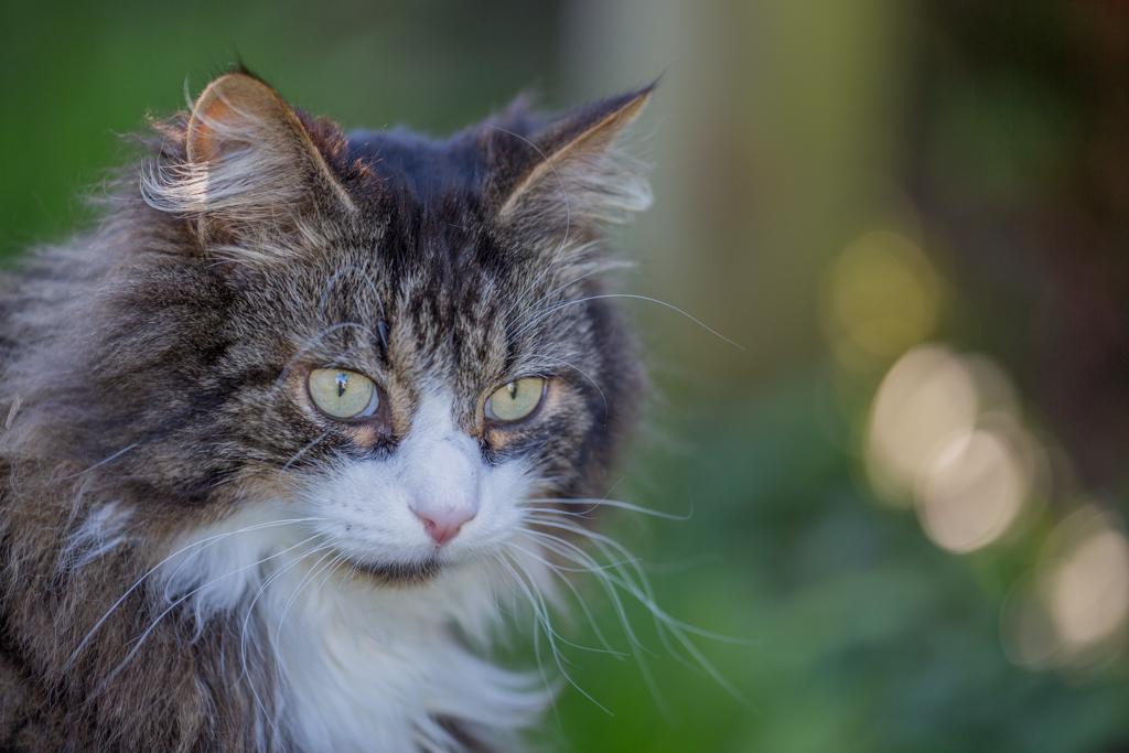 Neighbour's Cat from Schuebelbach