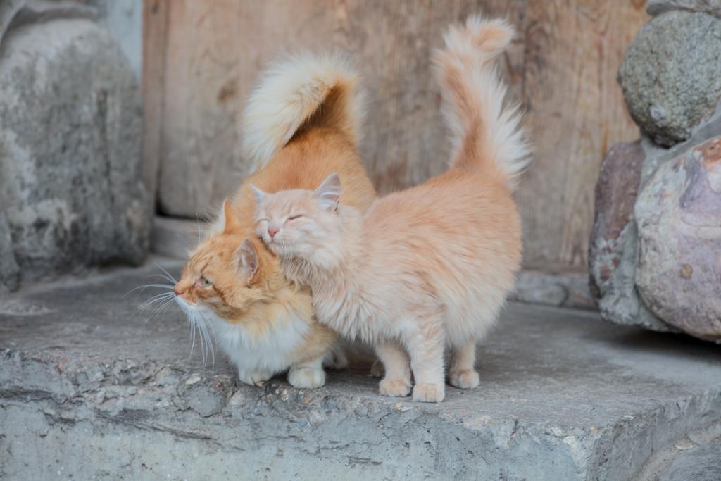 Loving cats in Heliopark Suzdal in Russia