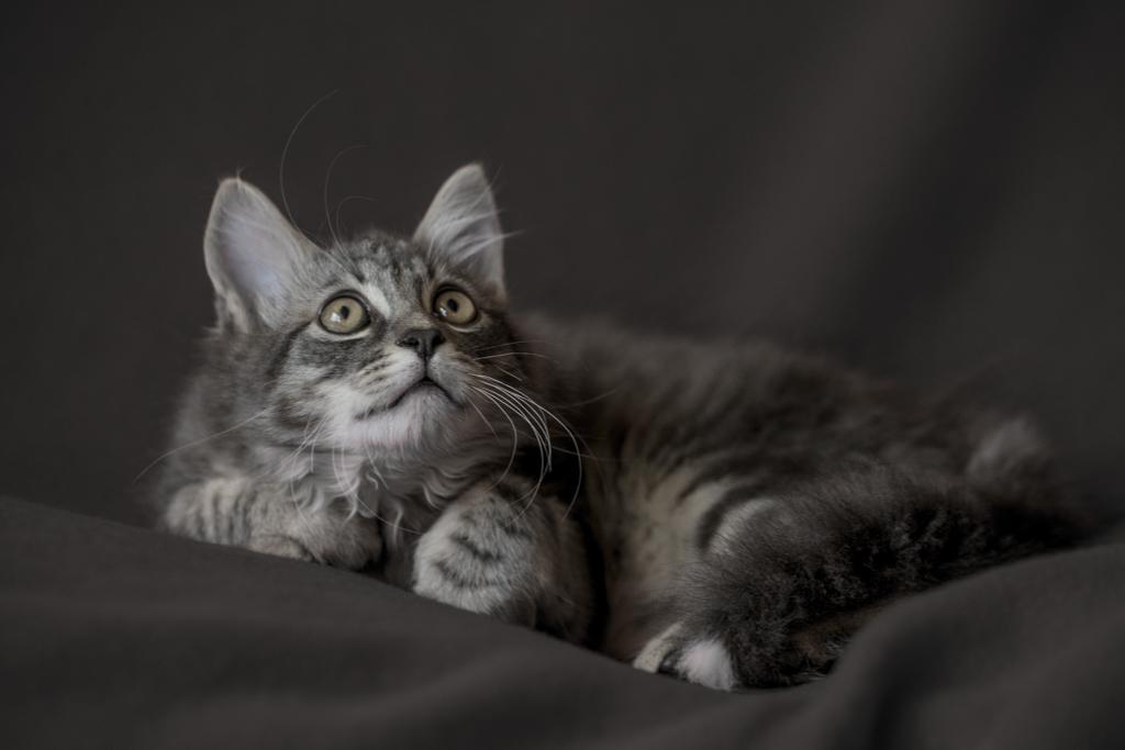 Little Cute Cat from Greece
