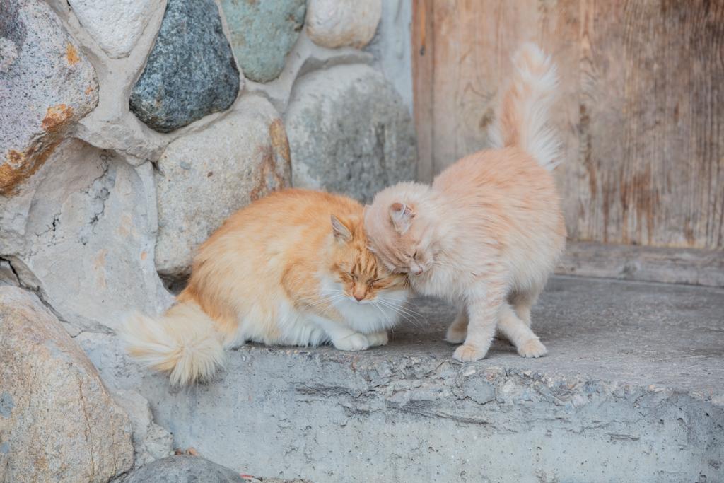 Loving cats in Suzdal/Russia