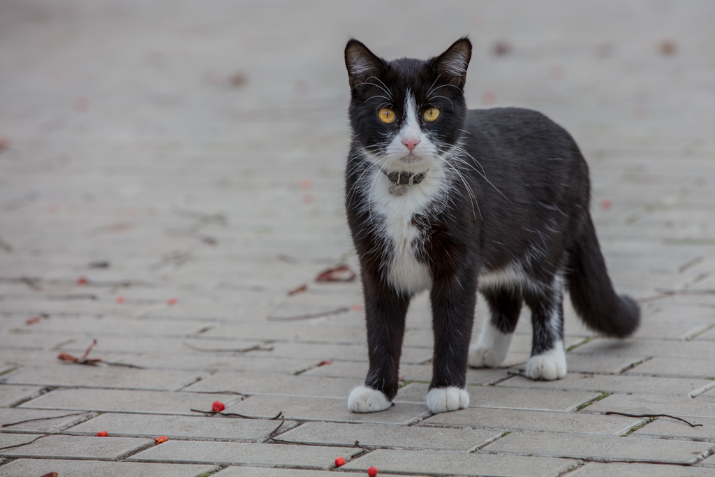 Black cat from Heliopark in Suzdal