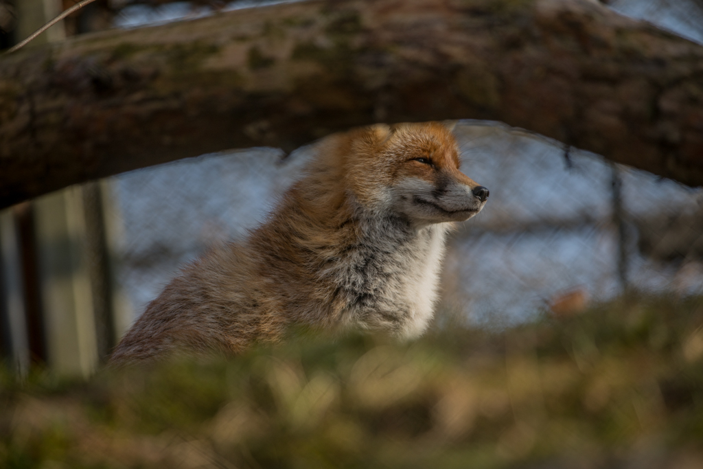 Wildlife_Park_Goldau_86.jpg
