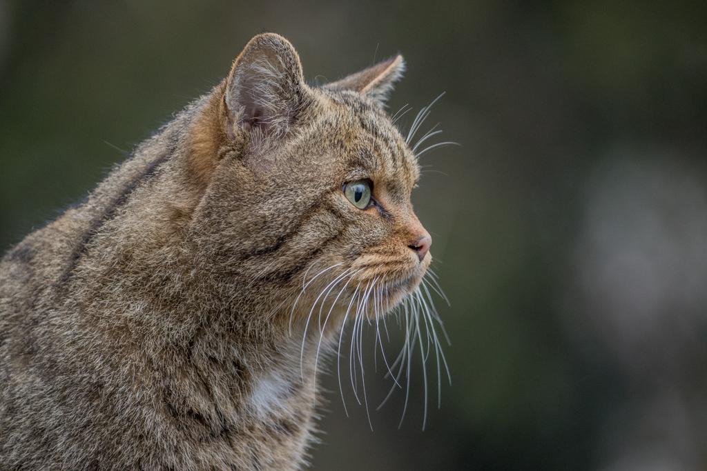 Wildlife_Park_Goldau_3.jpg