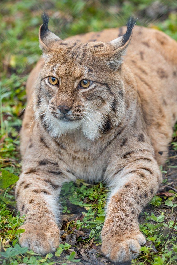 Wildlife_Park_Goldau_14.jpg