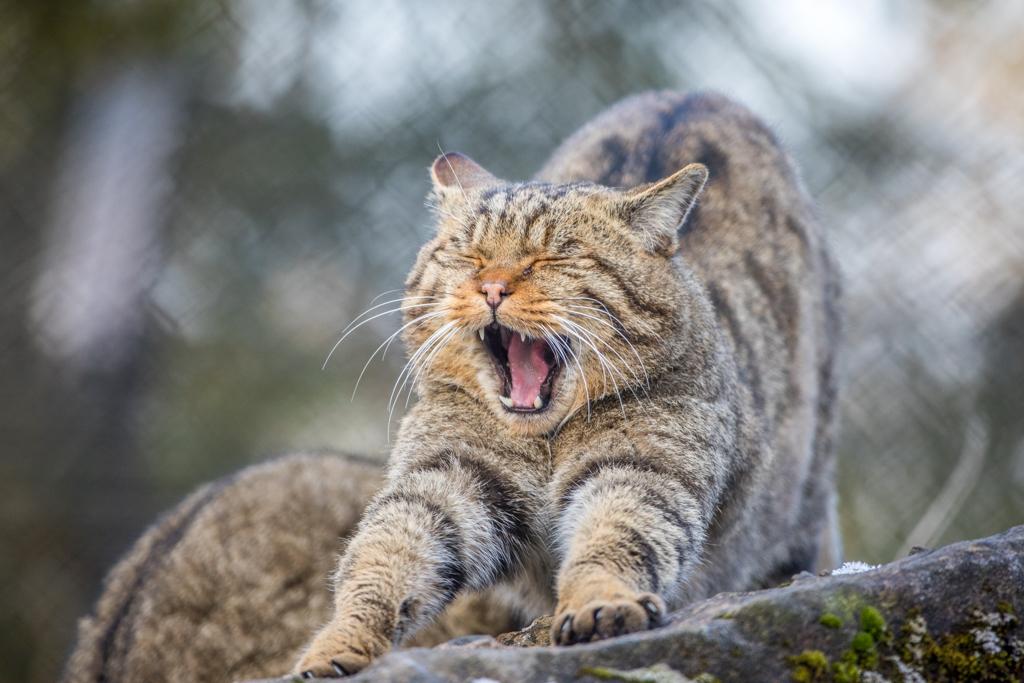 Wildlife_Park_Goldau_37.jpg