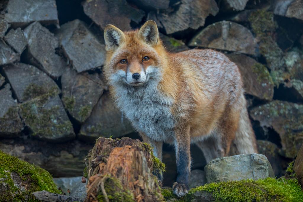 Wildlife_Park_Goldau_101.jpg