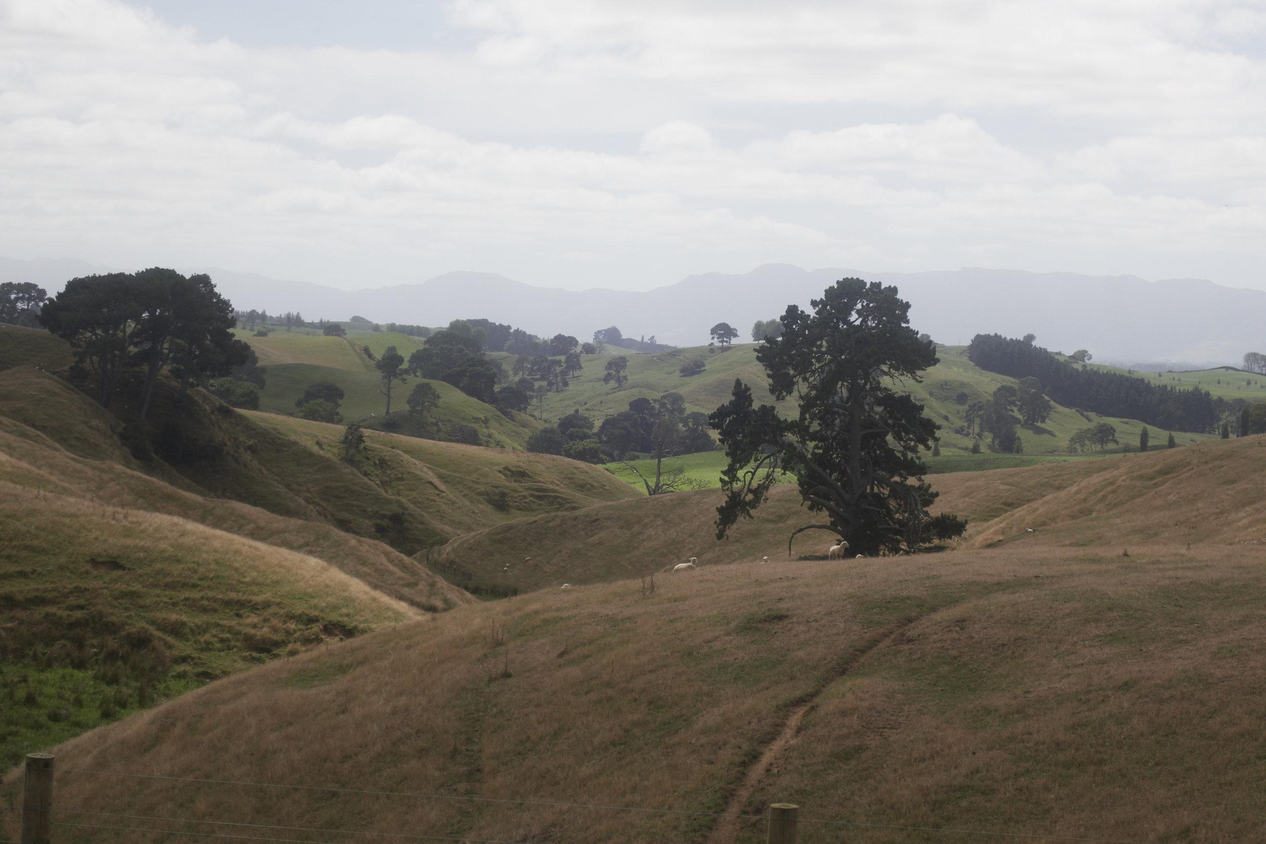 Matamata, New Zealand