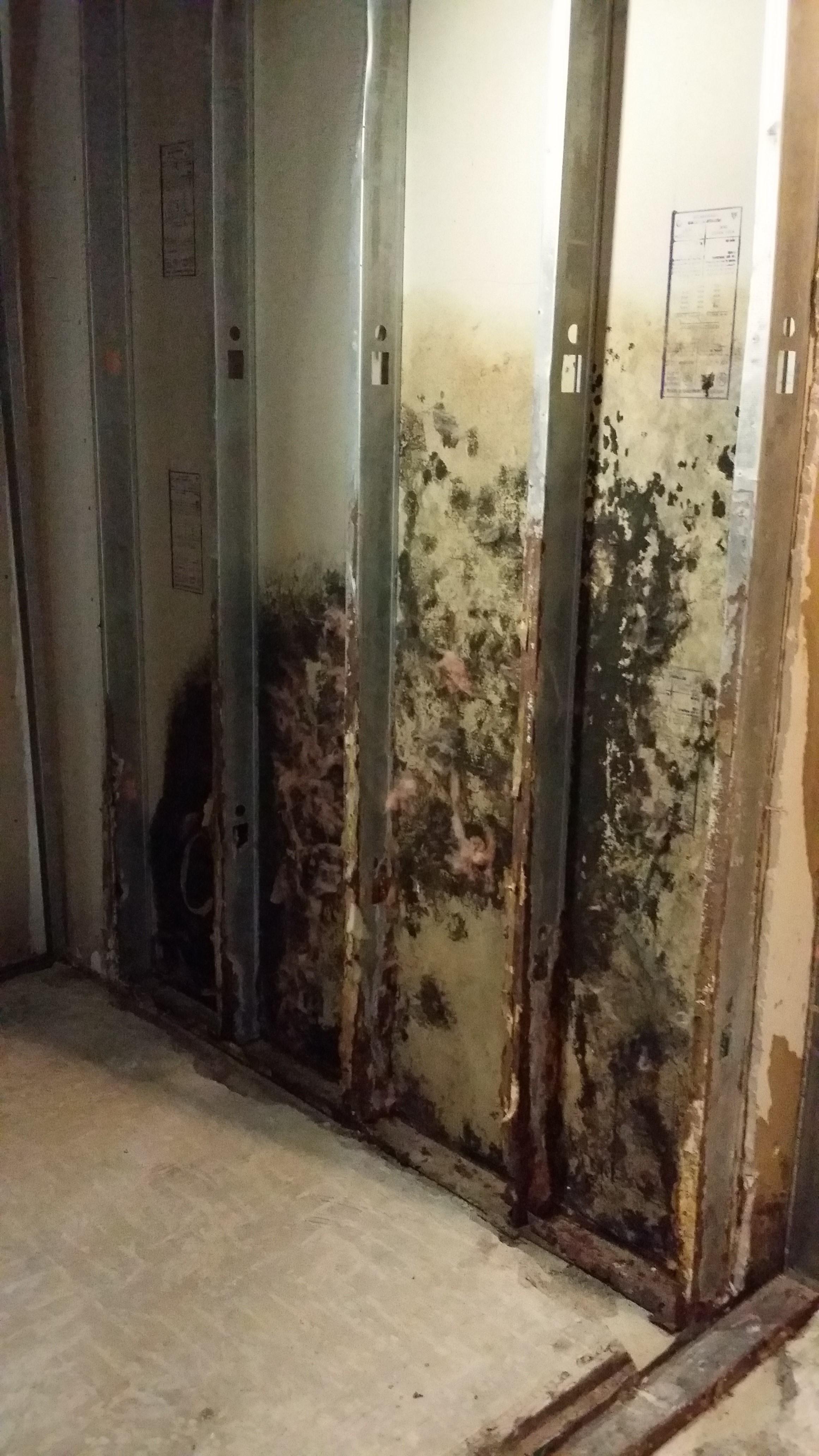 In Progress Demolition. Detail of Rusty Studs.