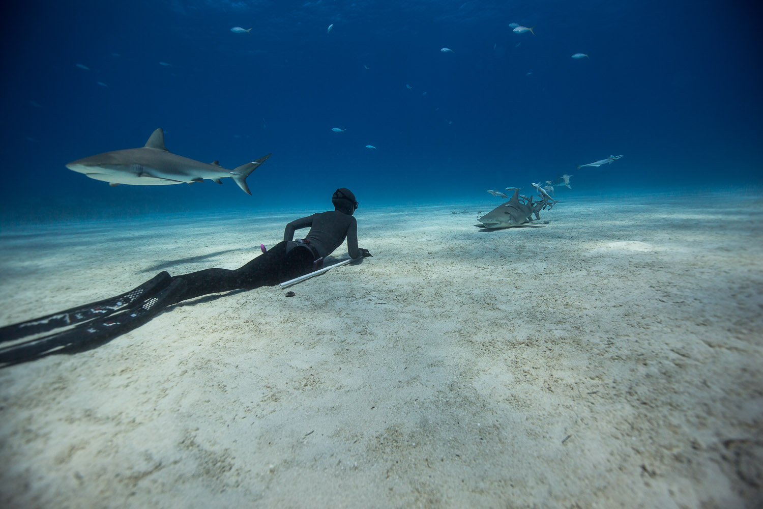 Freediving with Sharks