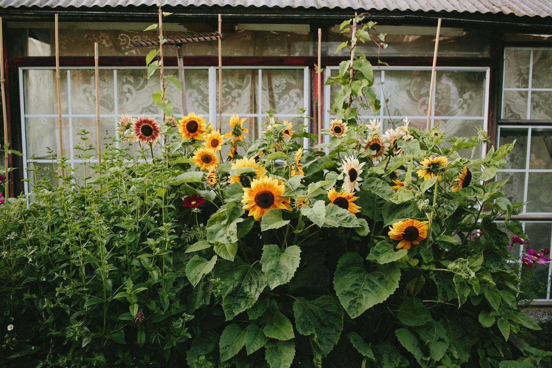 Vancouver-Rustic-Farm-Wedding-KB-148.jpg