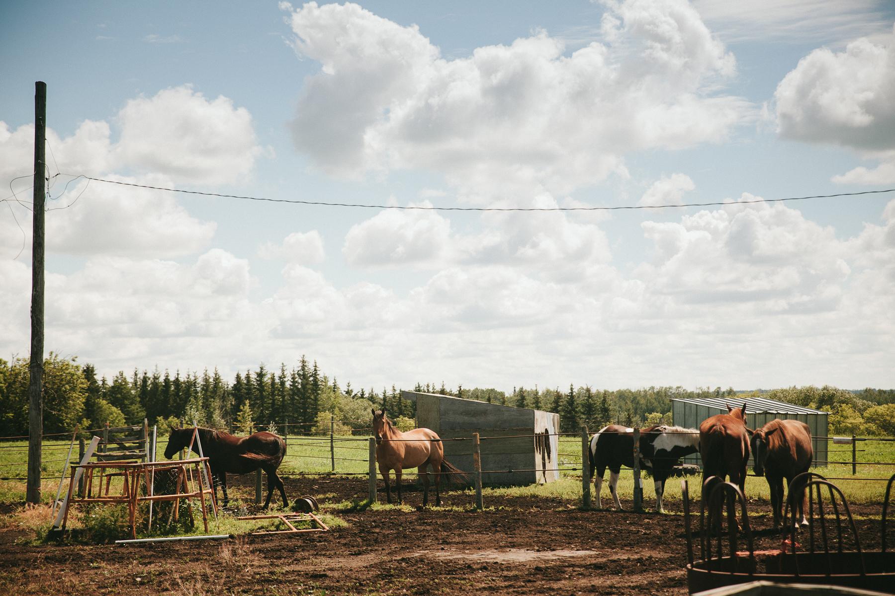 alberta-farm-wedding-photographer-rp-wj-004.jpg