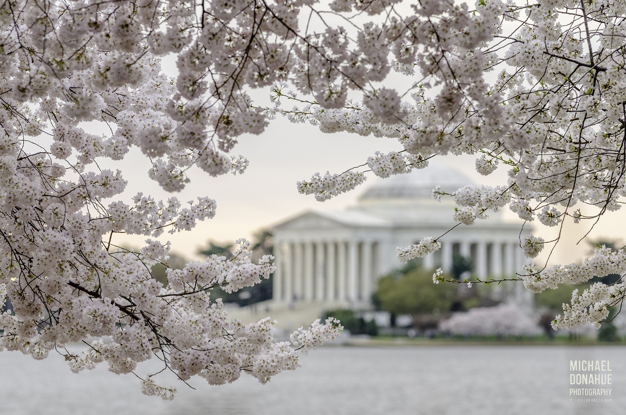 Jefferson Memorial Through Blossoms by Michael Donahue