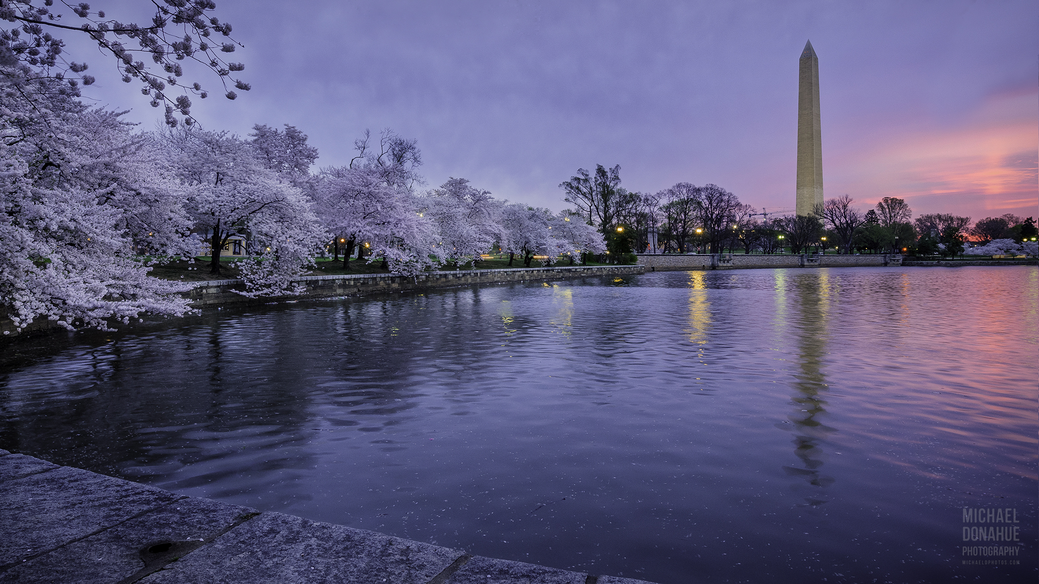 Cherry Blossom Glow by Michael Donahue