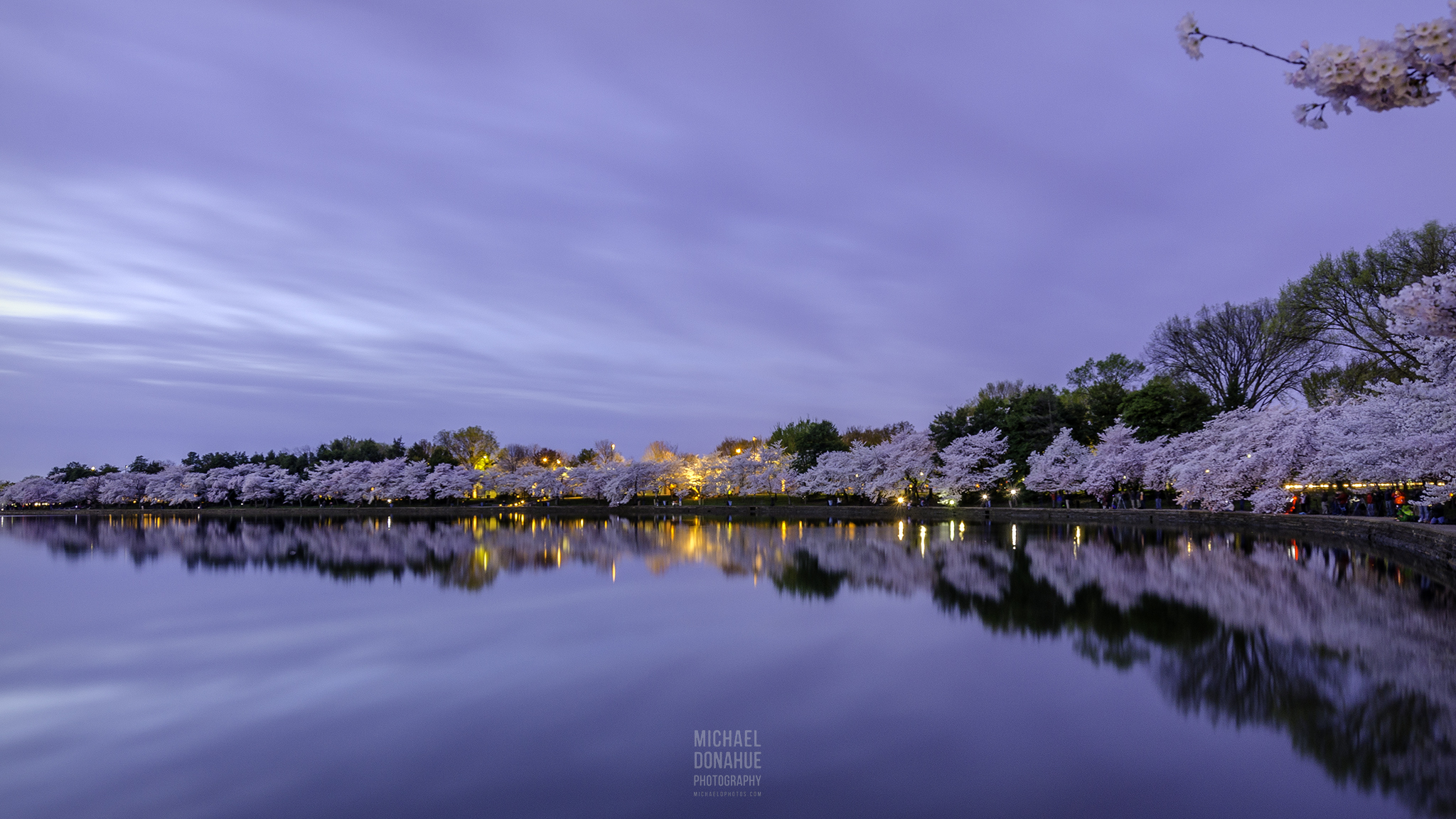 Blossom Reflection At Twilight by Michael Donahue