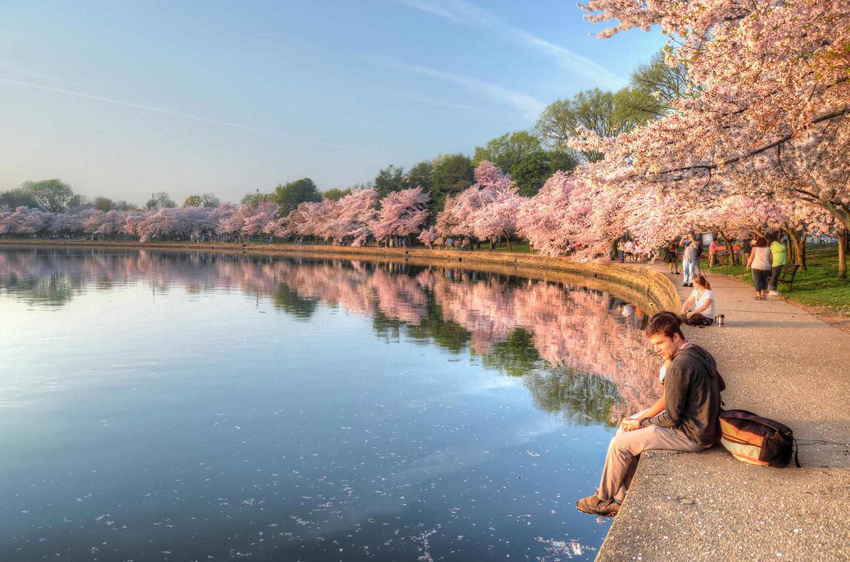 Cherry Blossom Love R.jpg