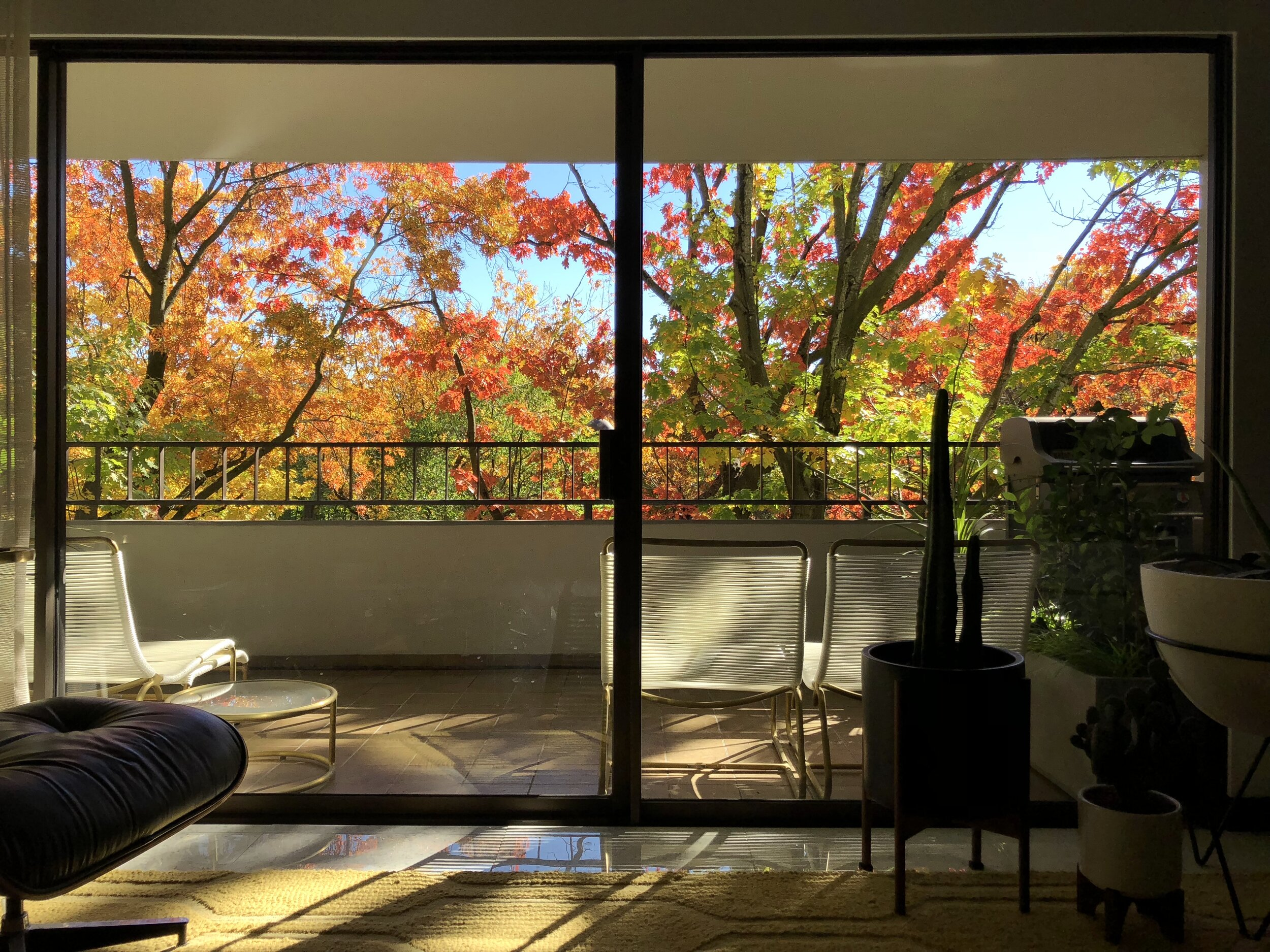 View of 2018 fall foliage from the living room