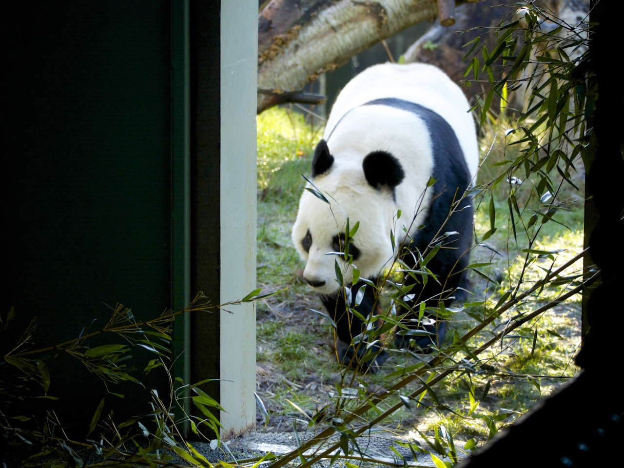 Edinburgh Zoo - 05.jpg