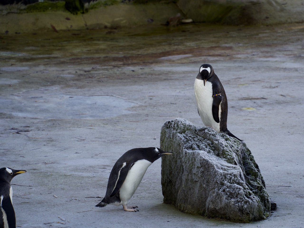 Edinburgh Zoo - 08.jpg