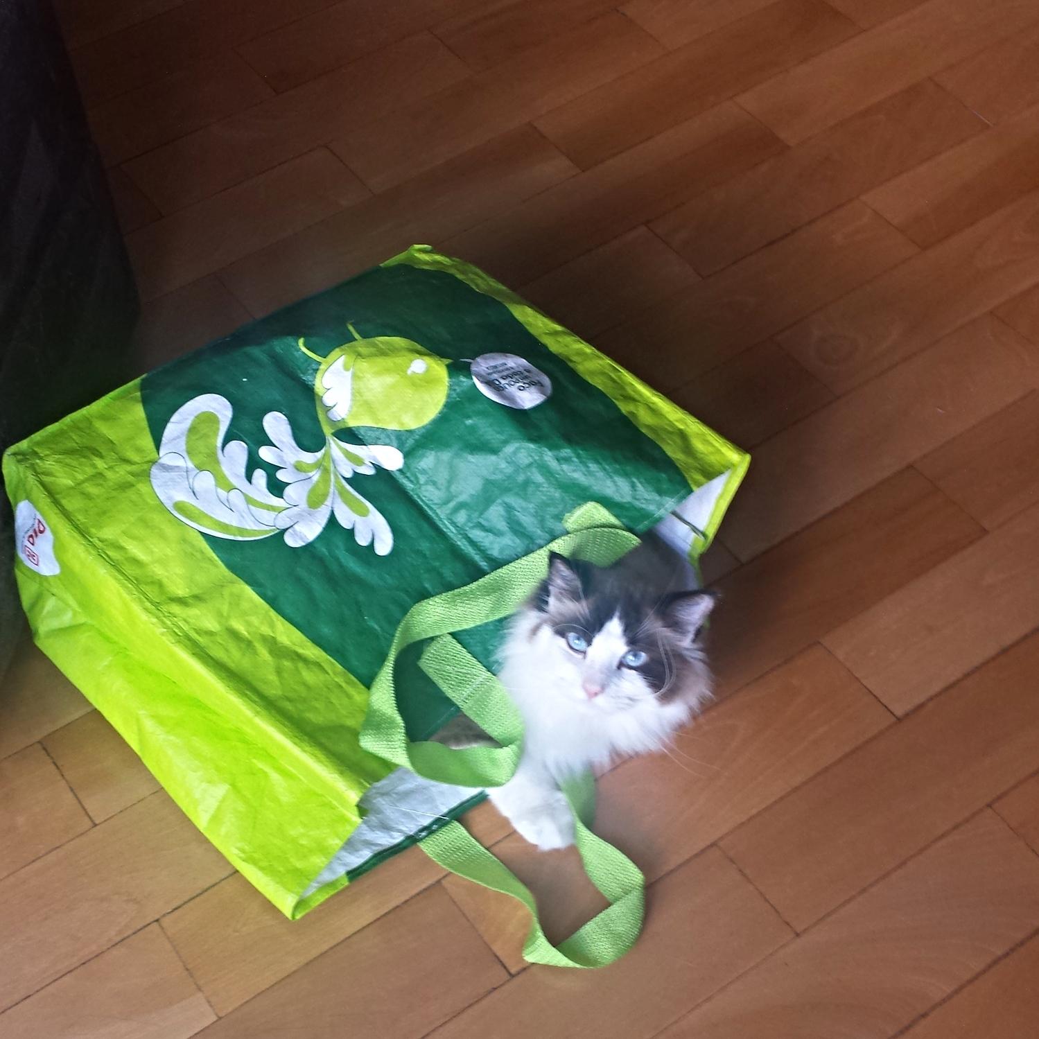 Link dentro da sacola que eu carreguei um saco de gelo!