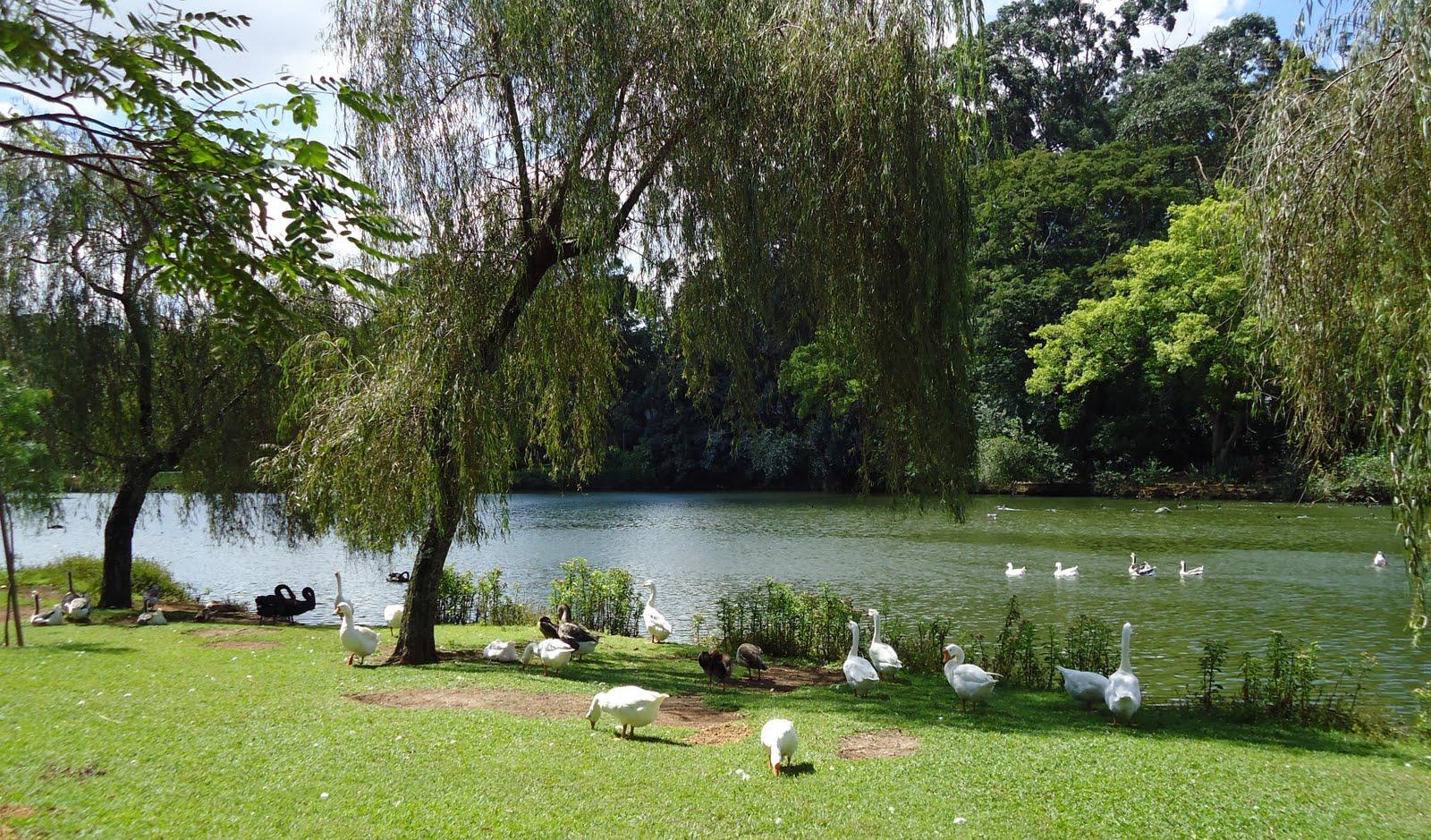 Passear no parque, ler um livro, fazer um piquenique!