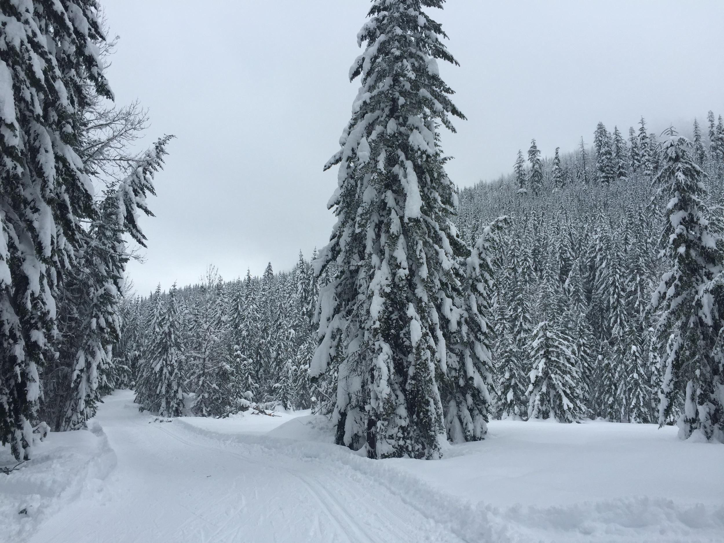 This picture does NOT do this justice. It was on a little loop that I skied several times, and each time, it stopped me.
