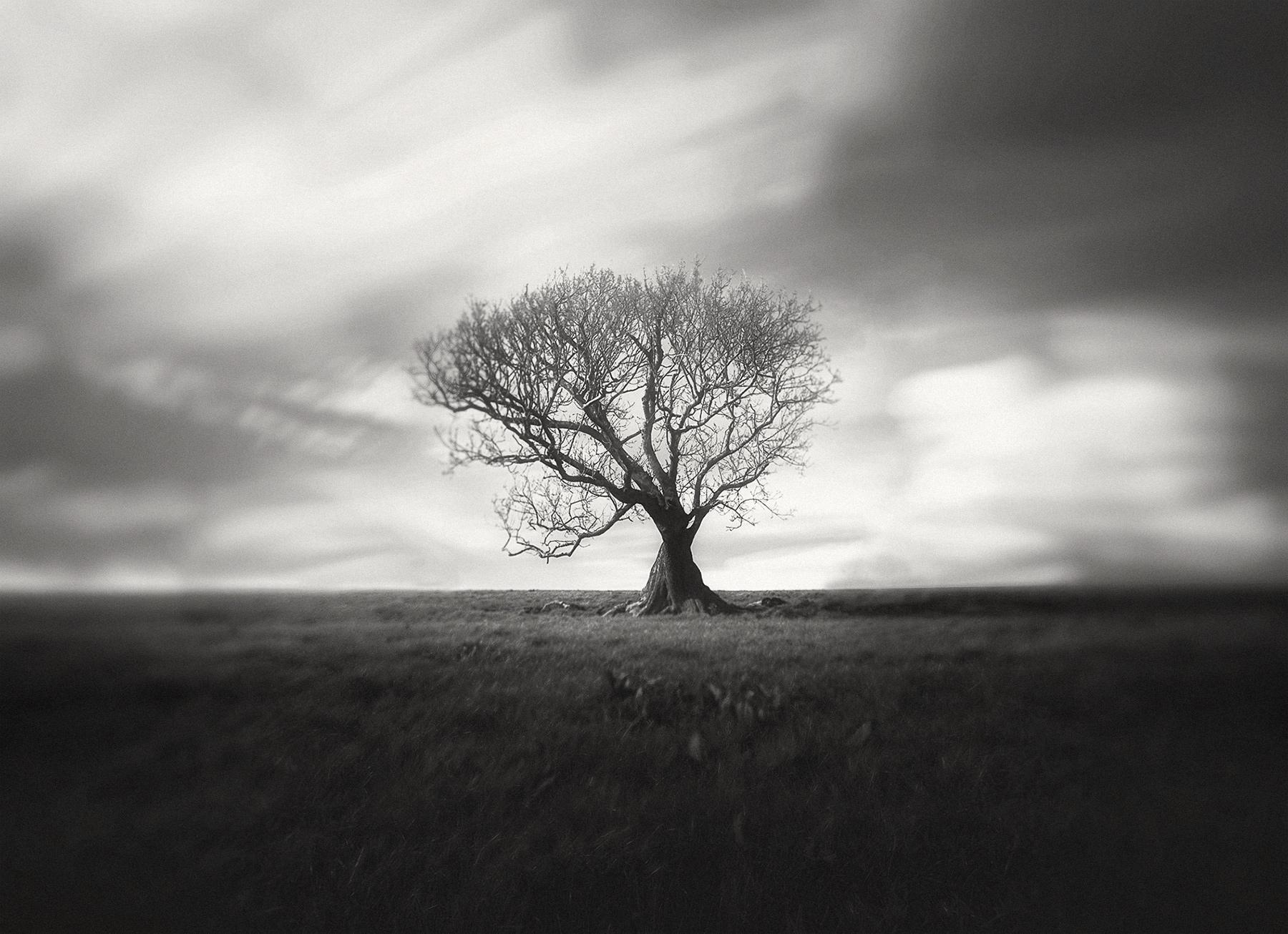 TREE_00223b.jpg