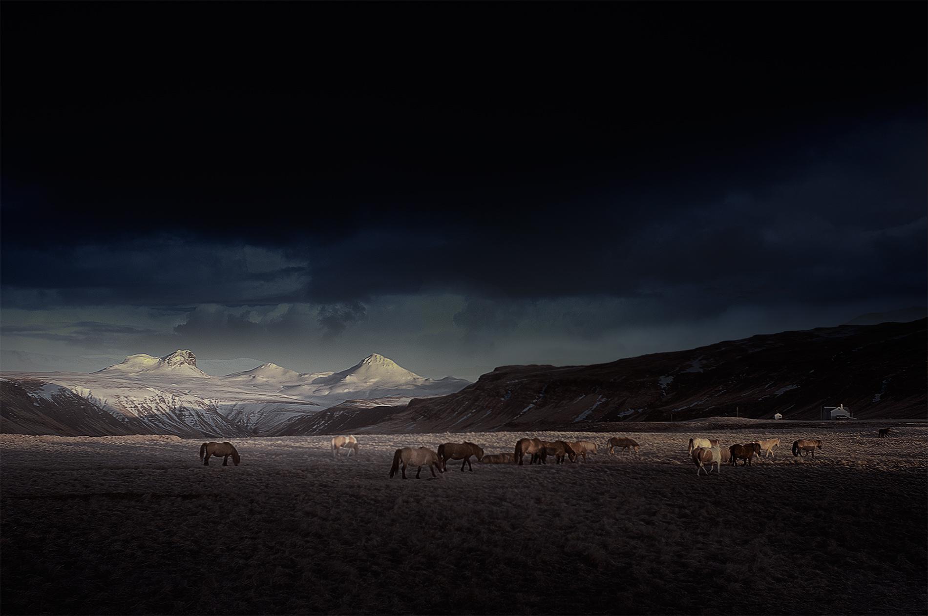 horses_baula (1).jpg