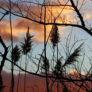Sunset-Reeds_.jpg