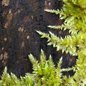 Moss_.jpg