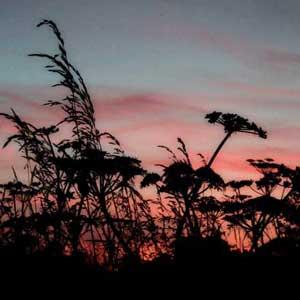 sunset-seeds__.jpg