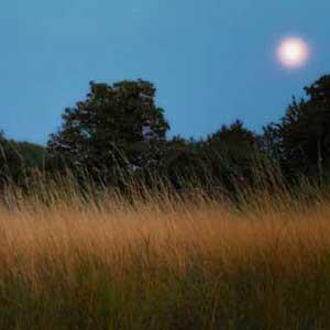 Moon_grass_moat3__.jpg