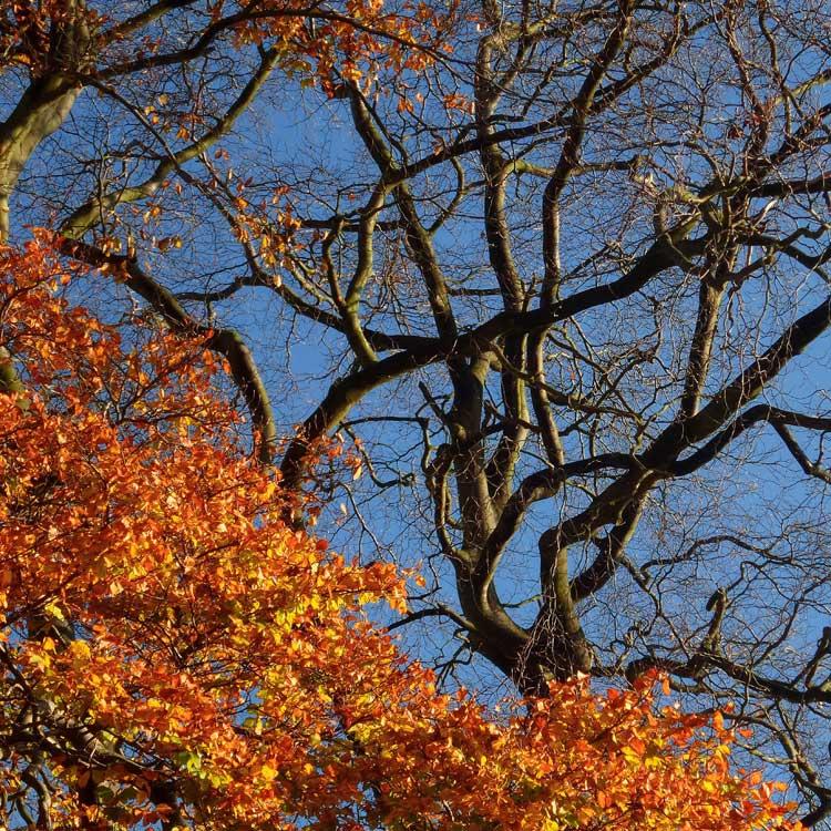 Autumn_.jpg
