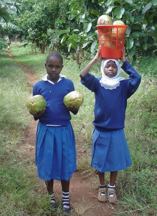 "Farming ""Fanta Passion"" fruit"