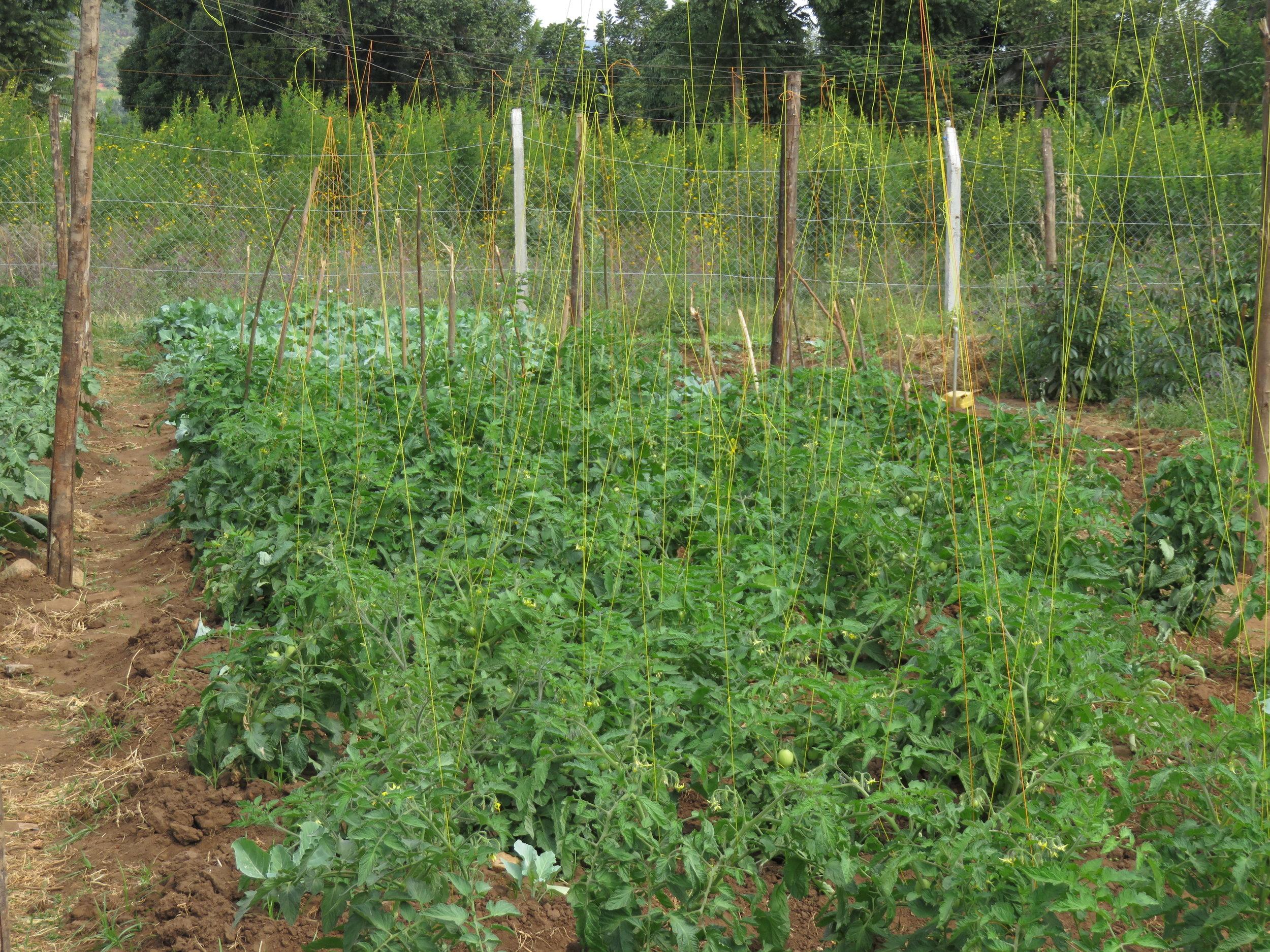 Vegetable Market Gardens