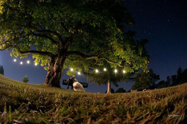 Under the stars ✨ ✨  #wvweddingphotographer #wvweddings #barnwedding #wvbarnwedding #