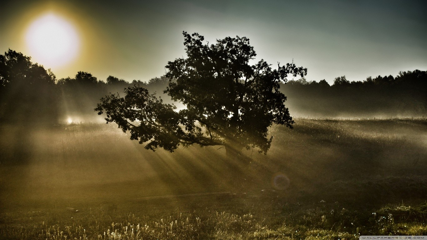 fields-tree-fable-sunlight-light-shine-sun-forest-fog-landscape-mist-rays-autumn-sunrise-sunshine-sunset-nature-scene-fall-dawn-seasons-dusk-field-gallery.jpg