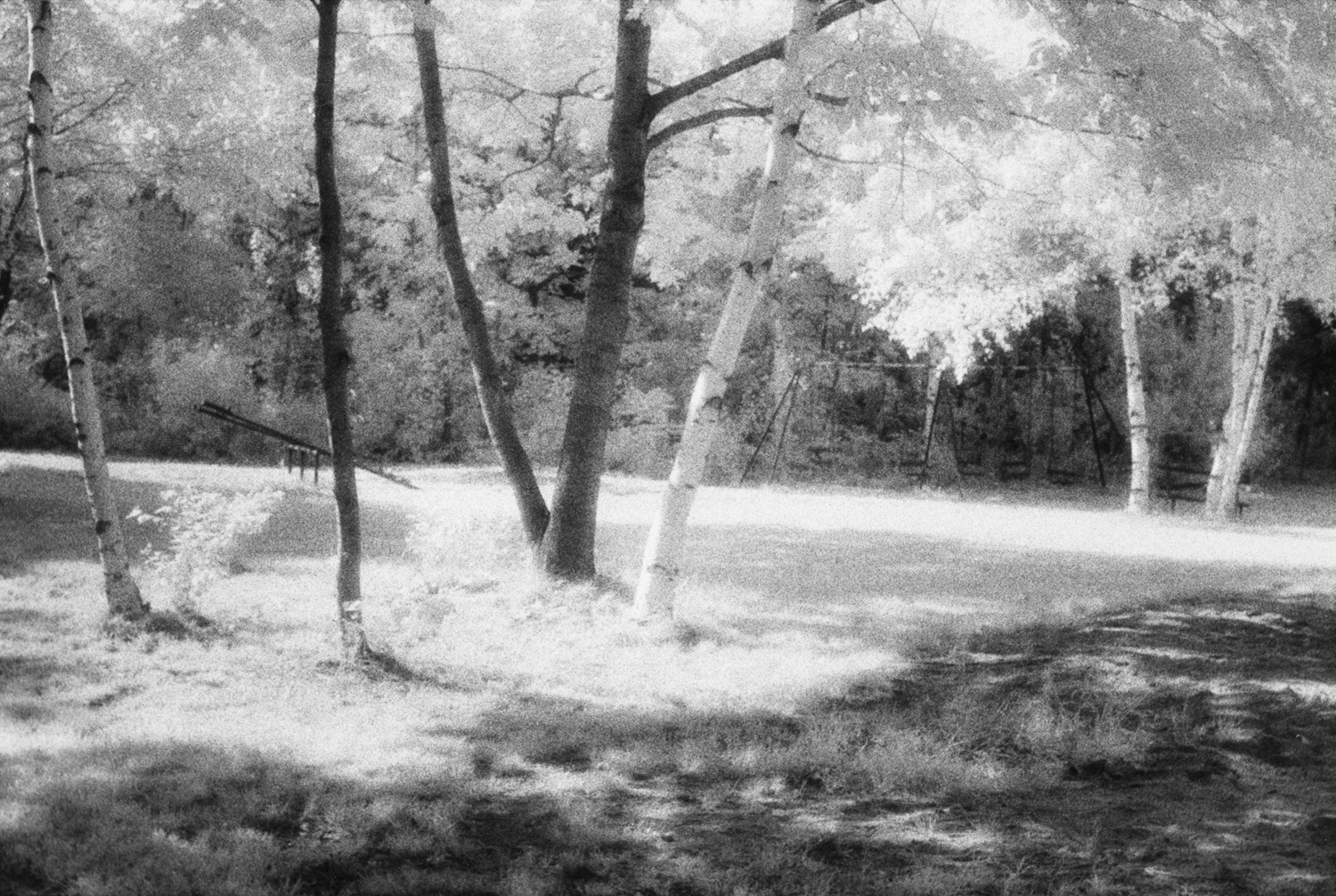 Island Glen , Great Diamond Island, Maine, 1986  Infrared Gelatin Silver Print  ©Judy Ellis Glickman. All Rights Reserved