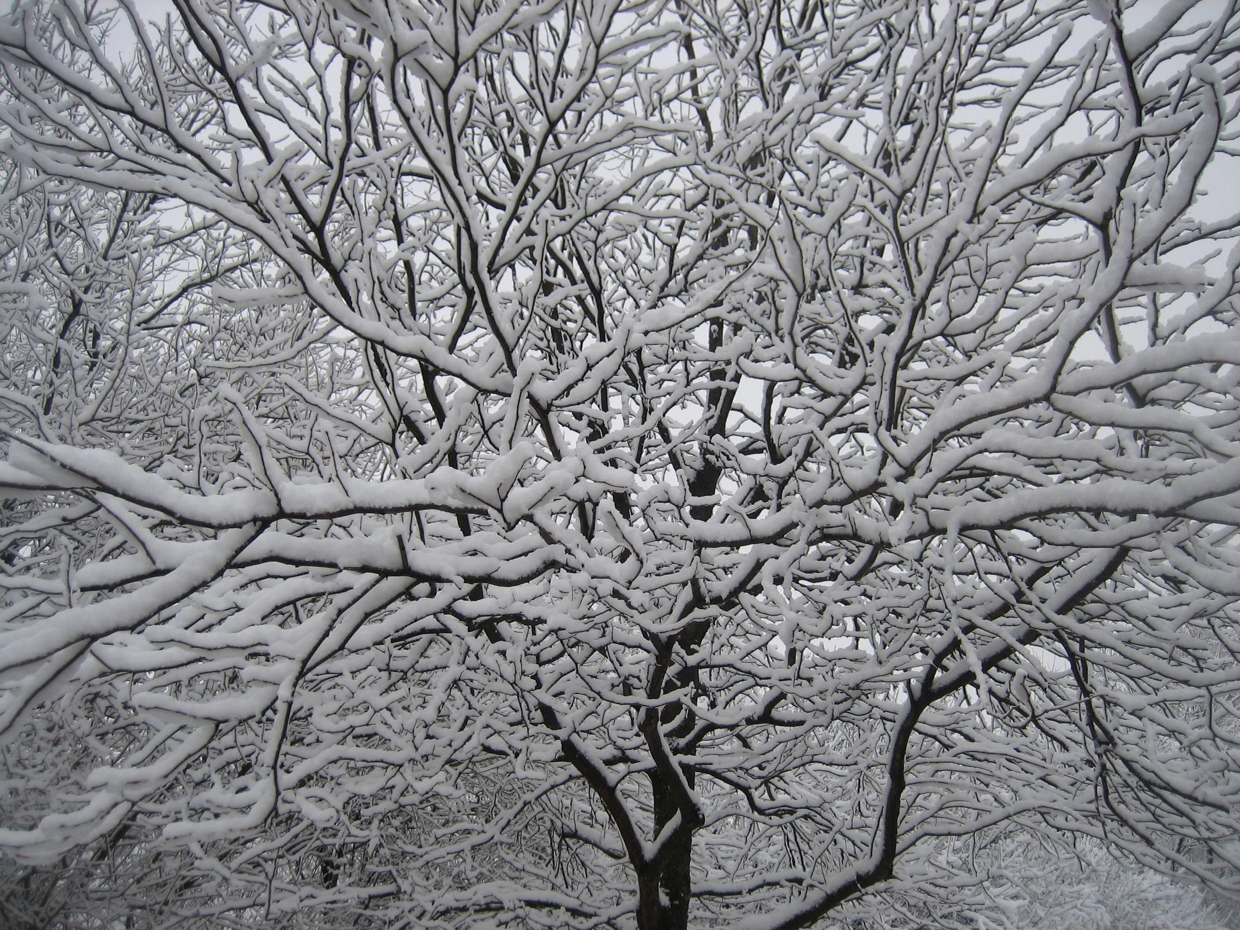 PH Winter Snow.JPG