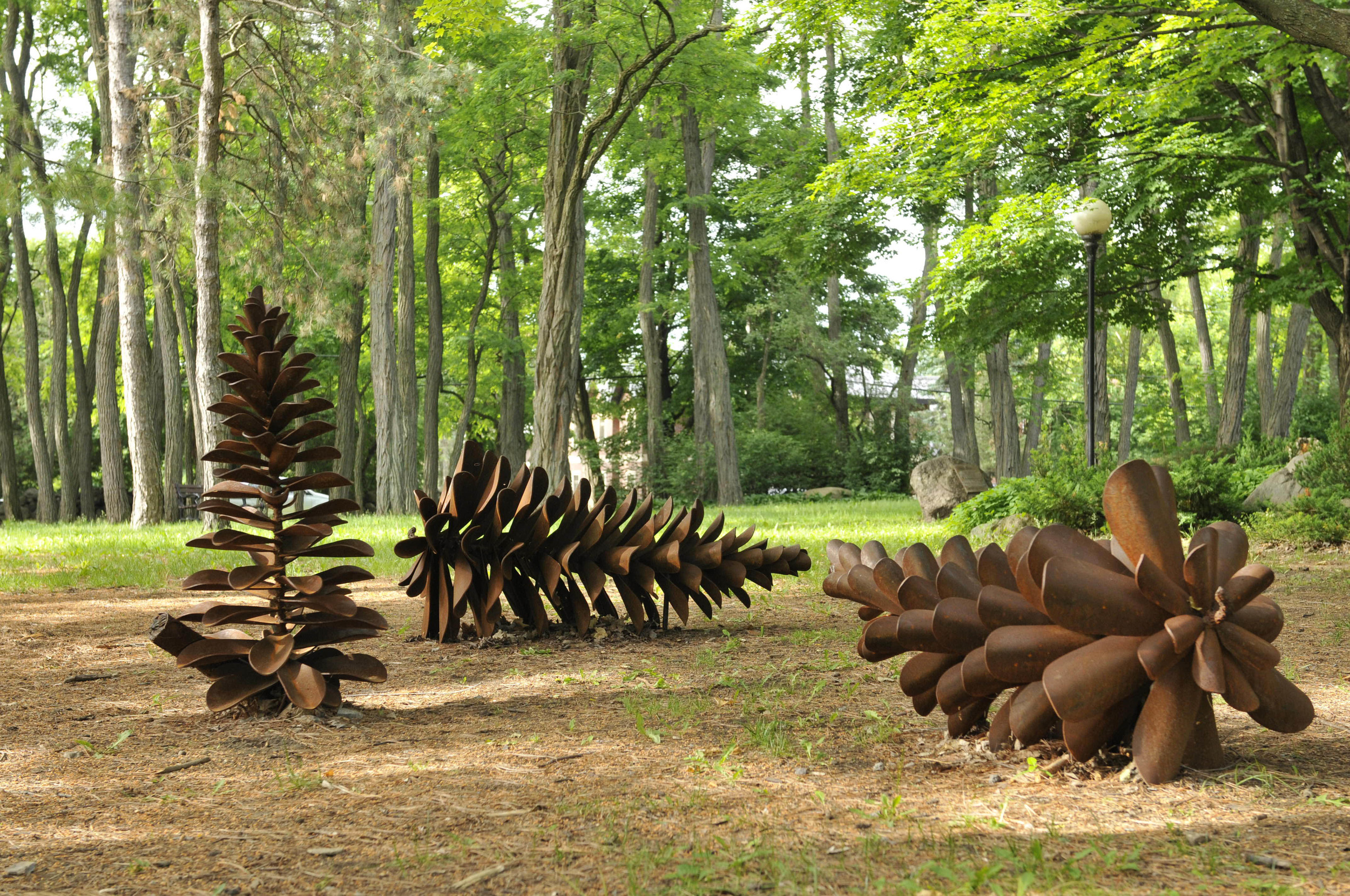 Elzinga Rockcliffe Cones D1600713.JPG