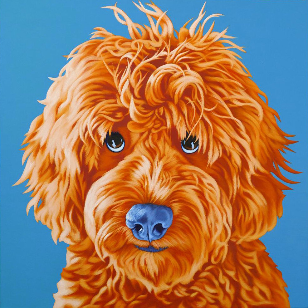 Chewy - Goldendoodle